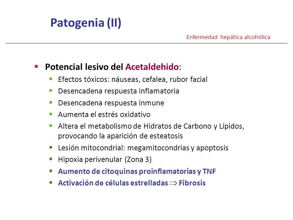 Potencial lesivo del Acetaldehido: Efectos tóxicos: náuseas, cefalea, rubor facial Desencadena respuesta inflamatoria Desencadena respuesta inmune Aum