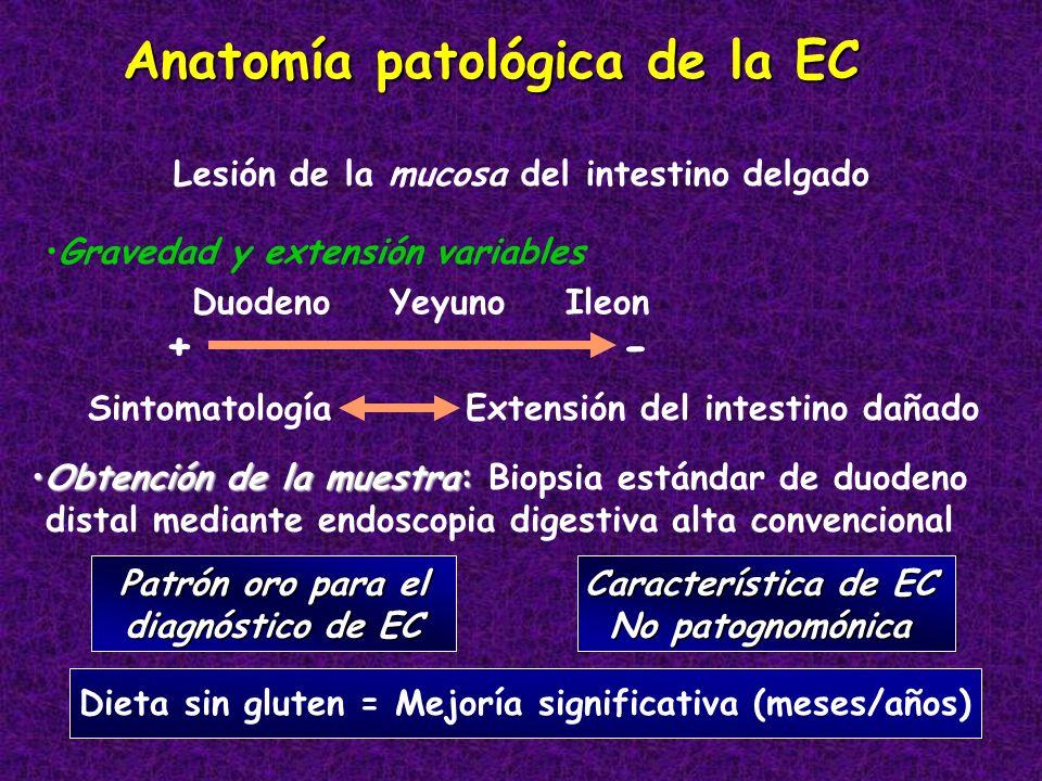 Anatomía patológica de la EC Lesión de la mucosa del intestino delgado Gravedad y extensión variables Duodeno Yeyuno Ileon + - Sintomatología Extensió