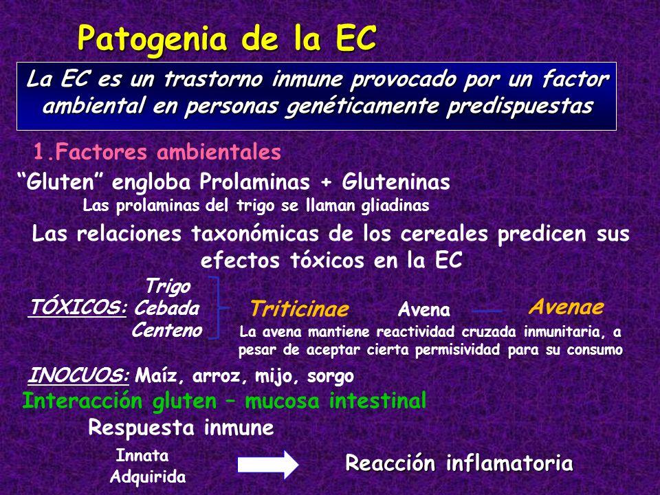 Patogenia de la EC La EC es un trastorno inmune provocado por un factor ambiental en personas genéticamente predispuestas 1.Factores ambientales Trigo