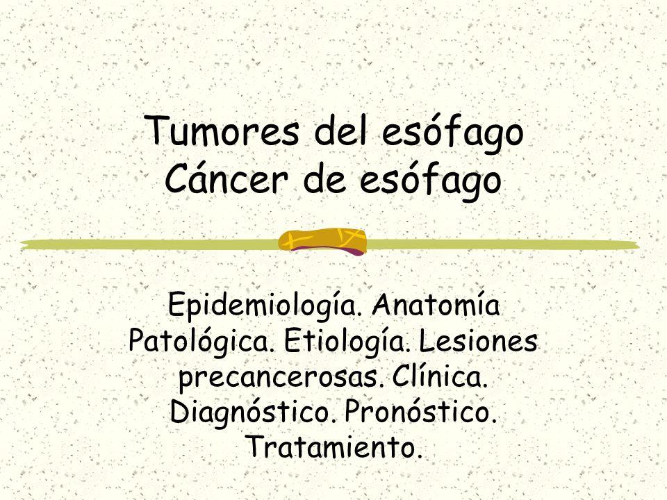 Anatomía Patológica Carcinoma epidermoide Epitelio escamoso Adenocarcinoma Epitelio columnar Benignos Leiomioma, Hemangioma, Papiloma Tercio superior 15 % Tercio medio 50 % Tercio inferior 35 %