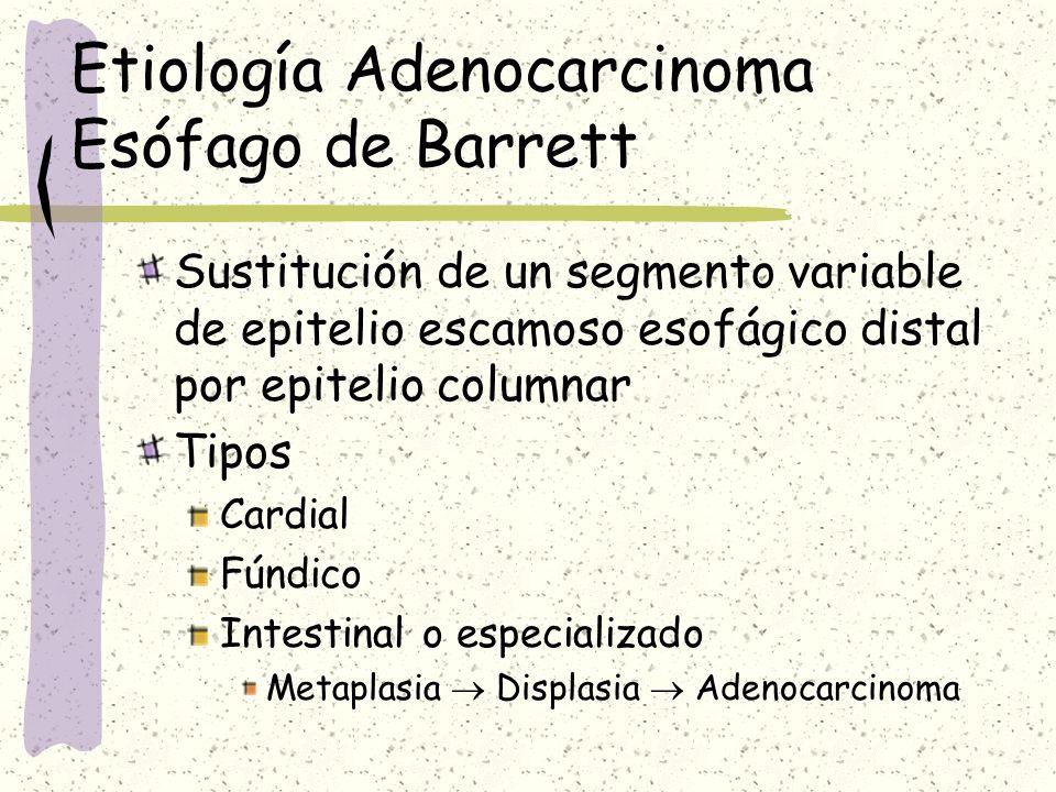 Etiología Adenocarcinoma Esófago de Barrett Lesión precancerosa Prevalencia 11-13 % Origen reflujo crónico Gástrico Duodenal Riesgo 30-125 veces población normal Segmento Corto < 3cm Largo = > 3 cm