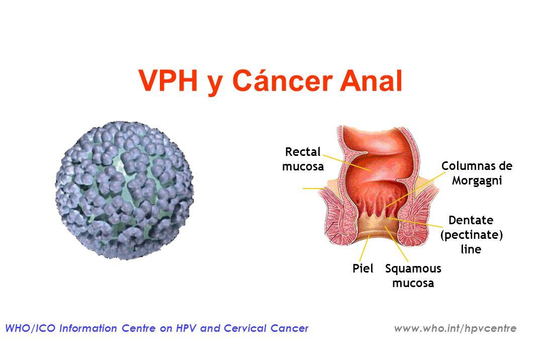 Institut Català dOncologia Carga de lesiones VPH en ambos sexos NOMBRE ESTIMADO DE NUEVOS CASOS EN EUROPA RELACIONADOS CON 6 11 16 & 18 CANCER DE PENE