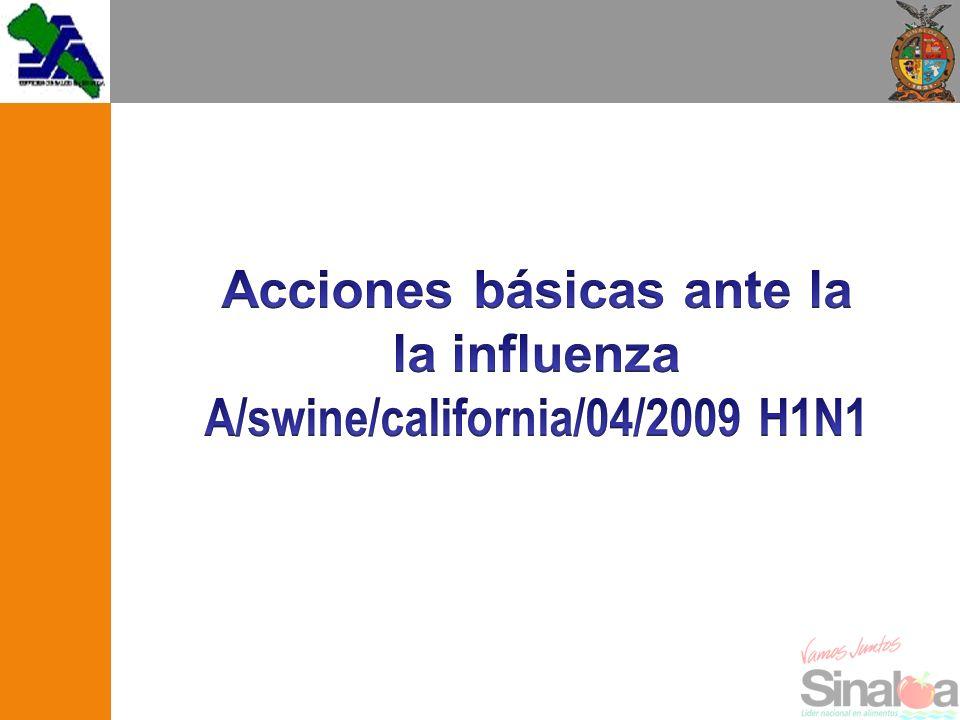 Nomenclatura A/ Swine/ California / 04/ 2009/ (H1N1) Tipo de virus (A).
