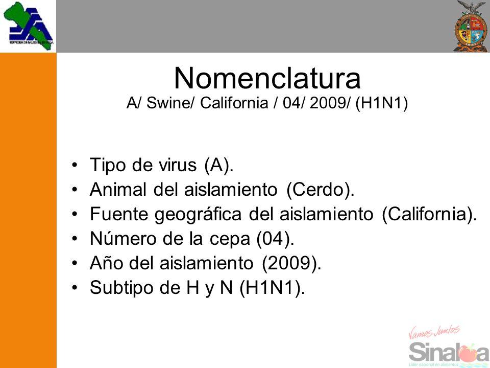 Nomenclatura A/ Swine/ California / 04/ 2009/ (H1N1) Tipo de virus (A). Animal del aislamiento (Cerdo). Fuente geográfica del aislamiento (California)