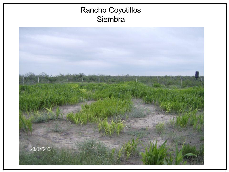 Rancho Coyotillos Siembra
