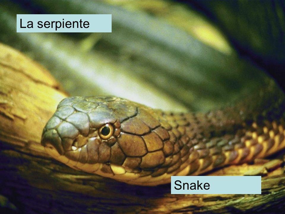 La serpiente Snake
