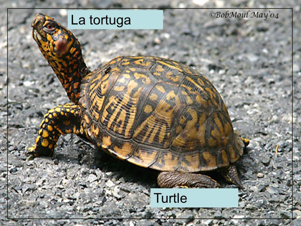 La tortuga Turtle