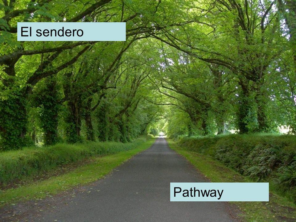 El sendero Pathway