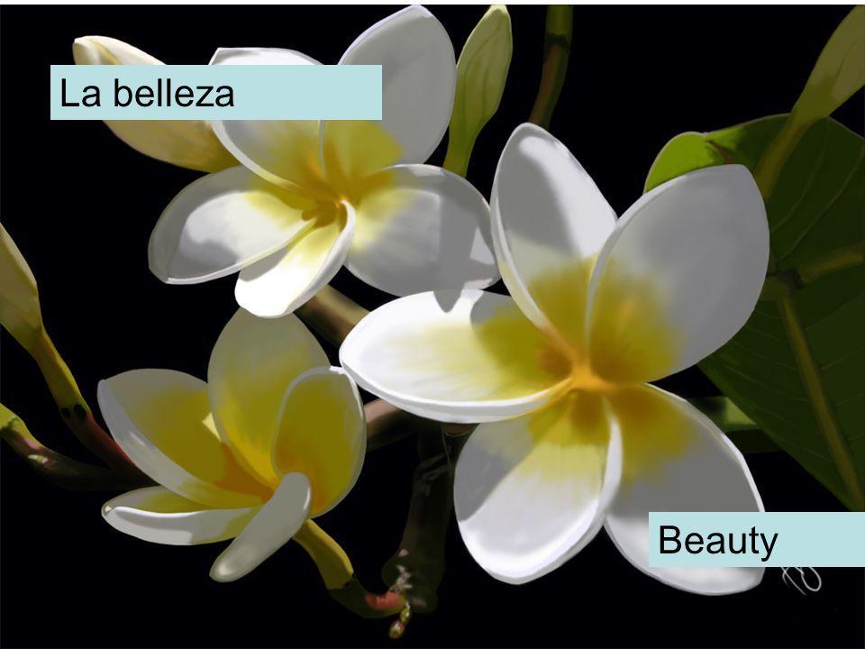 La belleza Beauty
