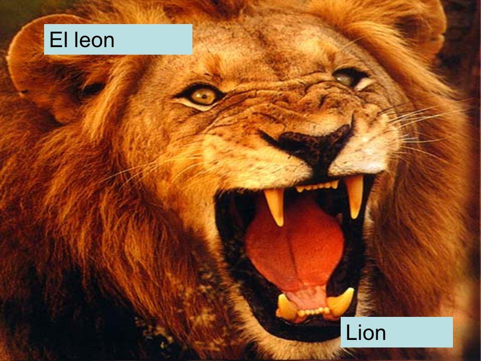 El leon Lion