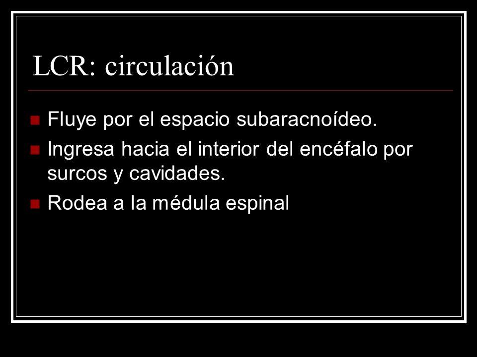 LCR: circulación Fluye por el espacio subaracnoídeo. Ingresa hacia el interior del encéfalo por surcos y cavidades. Rodea a la médula espinal