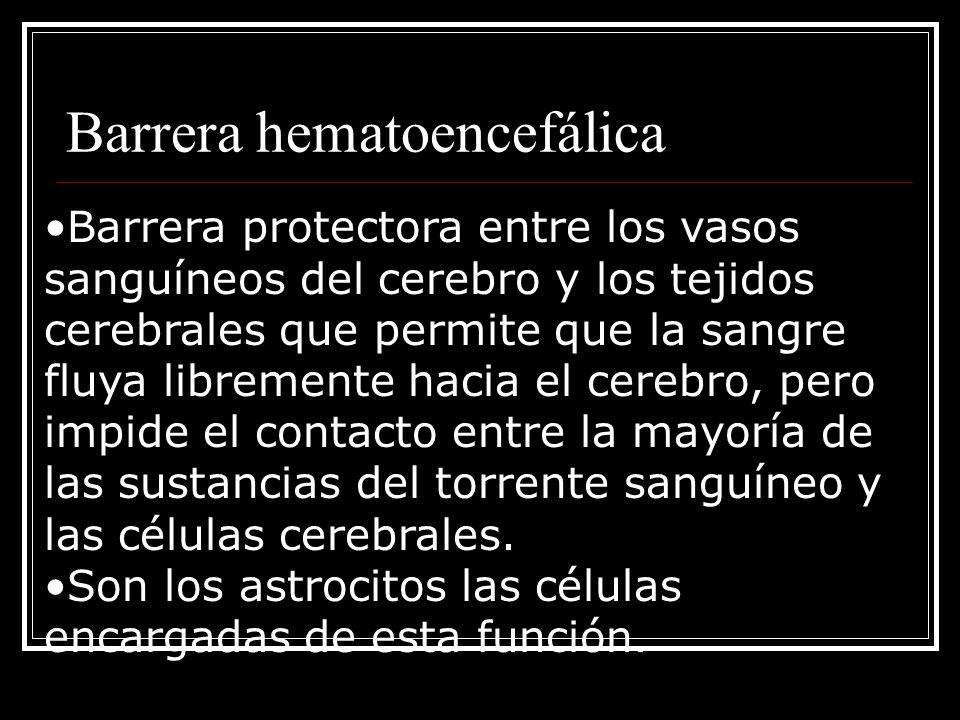 Barrera hematoencefálica Barrera protectora entre los vasos sanguíneos del cerebro y los tejidos cerebrales que permite que la sangre fluya libremente