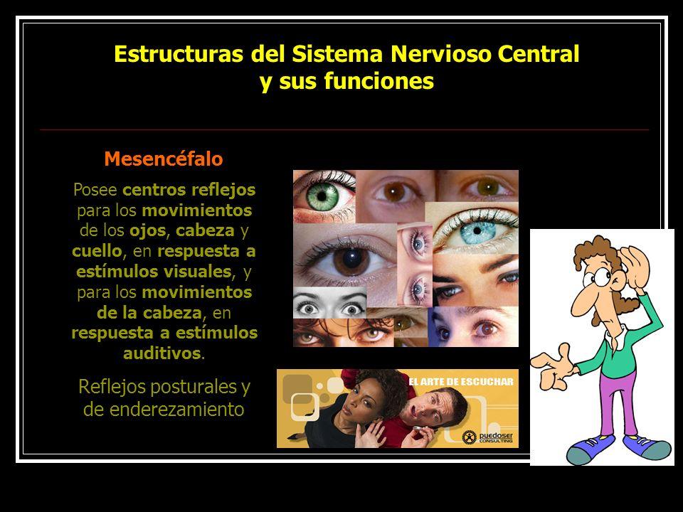Estructuras del Sistema Nervioso Central y sus funciones Mesencéfalo Posee centros reflejos para los movimientos de los ojos, cabeza y cuello, en resp