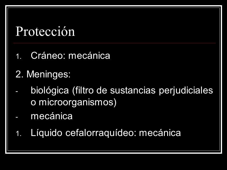 Protección 1. Cráneo: mecánica 2. Meninges: - biológica (filtro de sustancias perjudiciales o microorganismos) - mecánica 1. Líquido cefalorraquídeo: