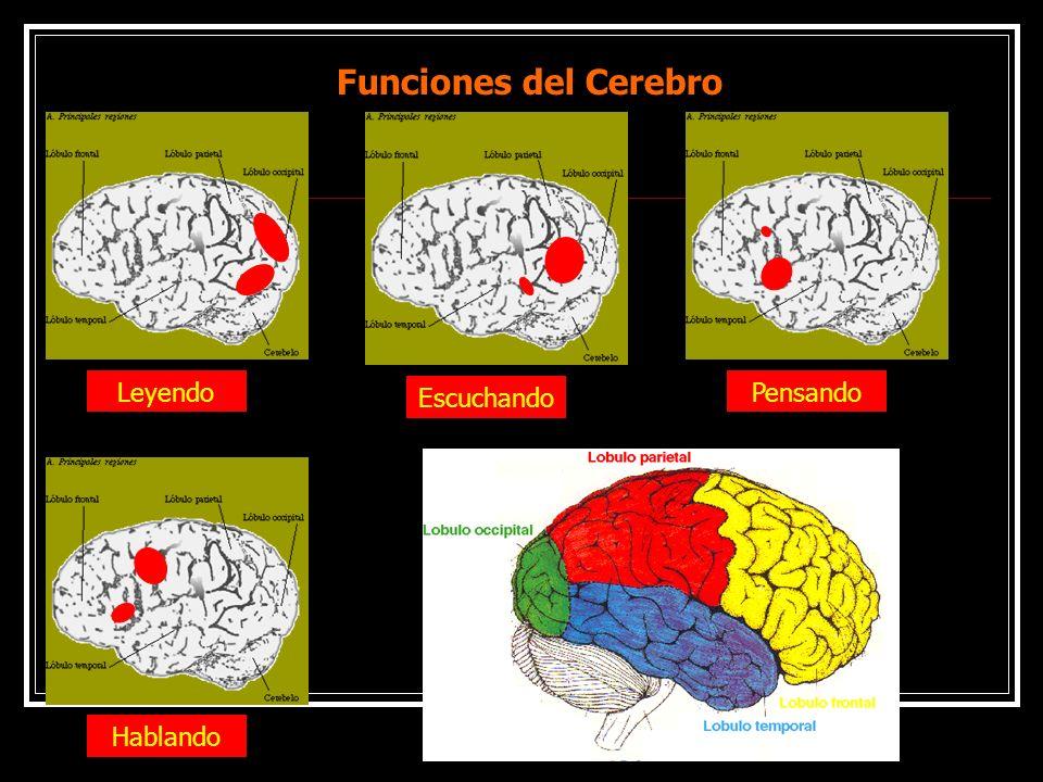 Funciones del Cerebro Leyendo Escuchando HablandoPensando