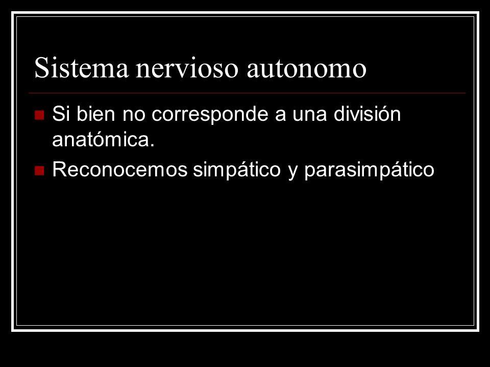 Sistema nervioso autonomo Si bien no corresponde a una división anatómica. Reconocemos simpático y parasimpático
