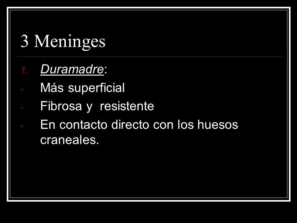 3 Meninges 1. Duramadre: - Más superficial - Fibrosa y resistente - En contacto directo con los huesos craneales.