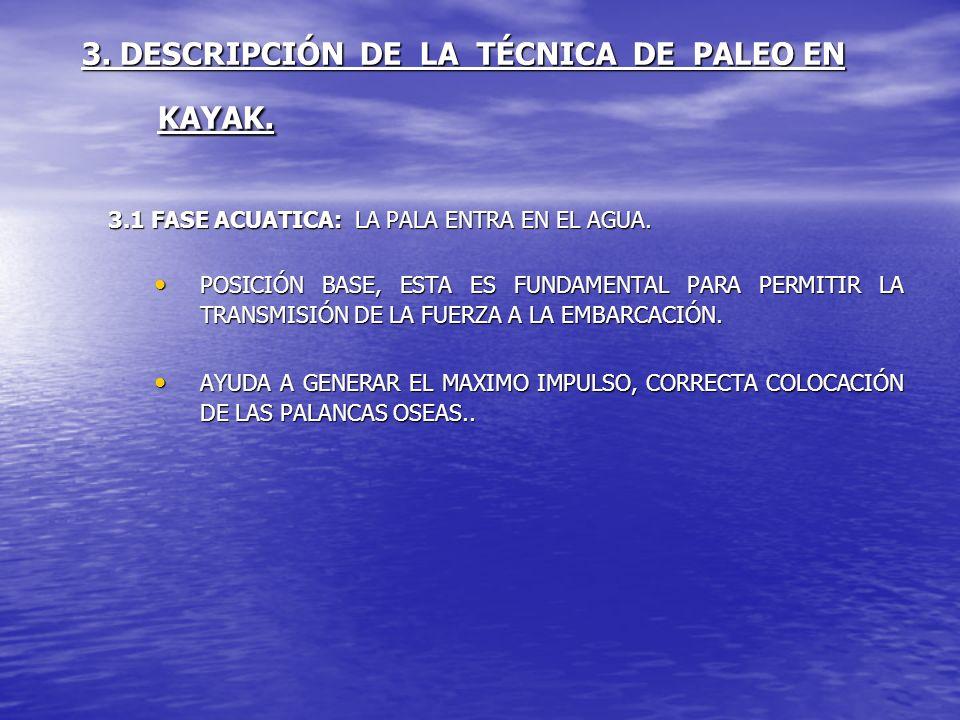 3. DESCRIPCIÓN DE LA TÉCNICA DE PALEO EN KAYAK. 3.1 FASE ACUATICA: LA PALA ENTRA EN EL AGUA. POSICIÓN BASE, ESTA ES FUNDAMENTAL PARA PERMITIR LA TRANS