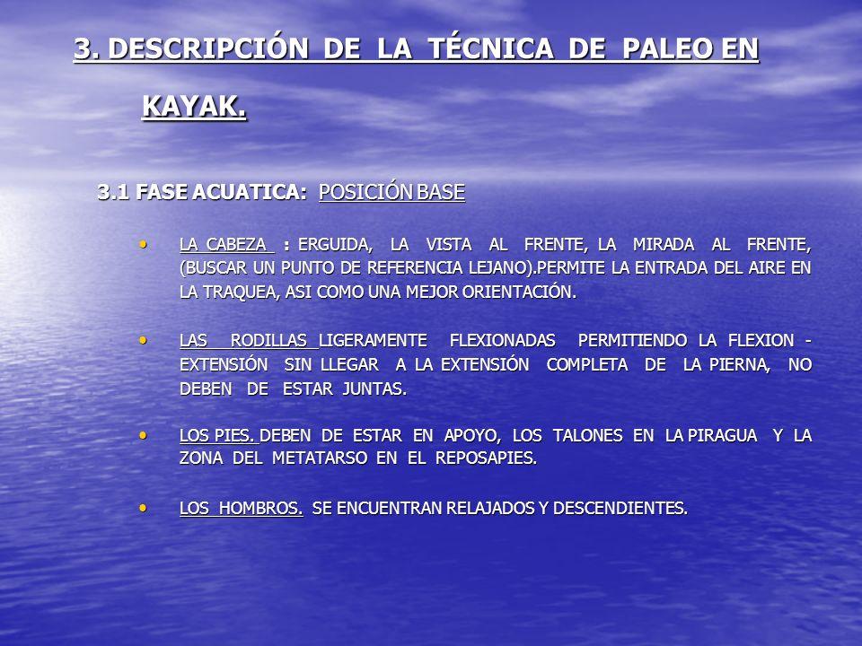 3. DESCRIPCIÓN DE LA TÉCNICA DE PALEO EN KAYAK. 3.1 FASE ACUATICA: POSICIÓN BASE LA CABEZA : ERGUIDA, LA VISTA AL FRENTE, LA MIRADA AL FRENTE, (BUSCAR