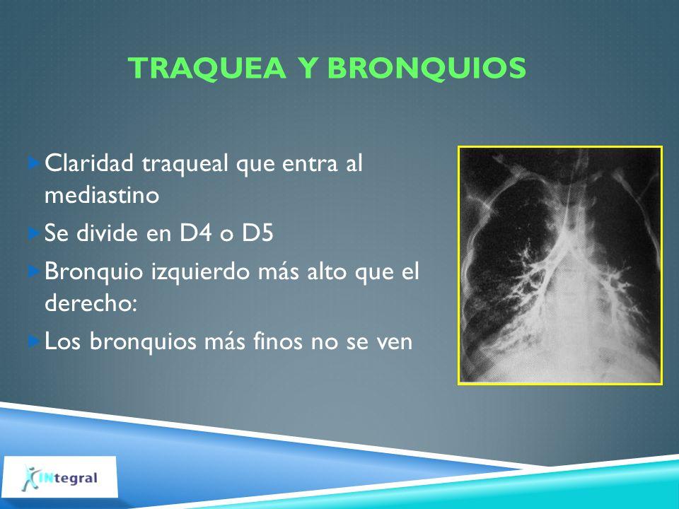 TRAQUEA Y BRONQUIOS Claridad traqueal que entra al mediastino Se divide en D4 o D5 Bronquio izquierdo más alto que el derecho: Los bronquios más finos