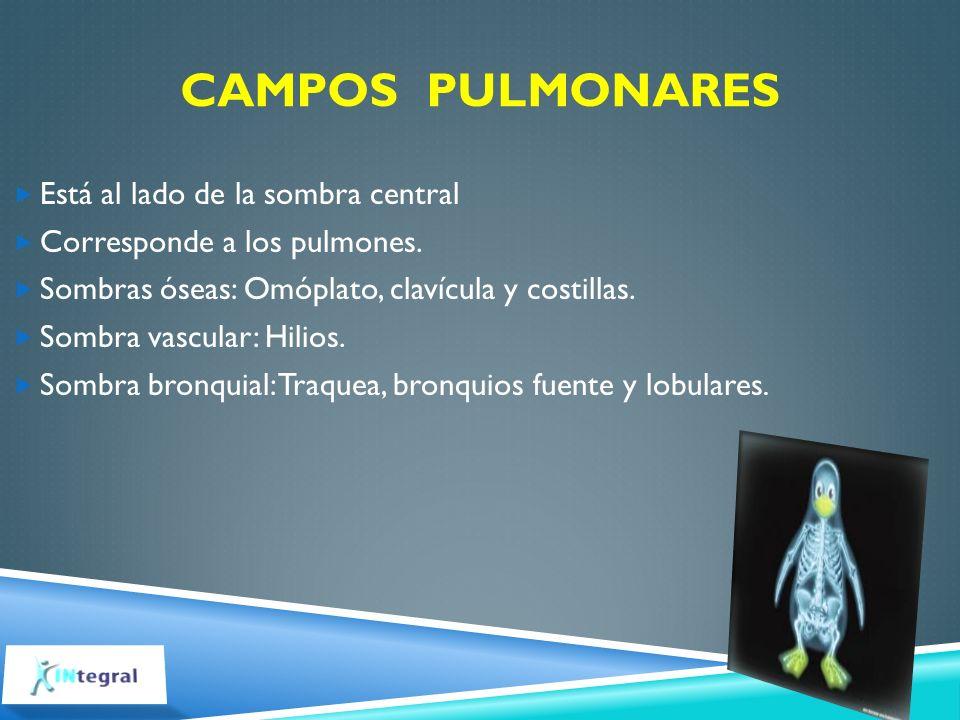 CAMPOS PULMONARES Está al lado de la sombra central Corresponde a los pulmones. Sombras óseas: Omóplato, clavícula y costillas. Sombra vascular: Hilio