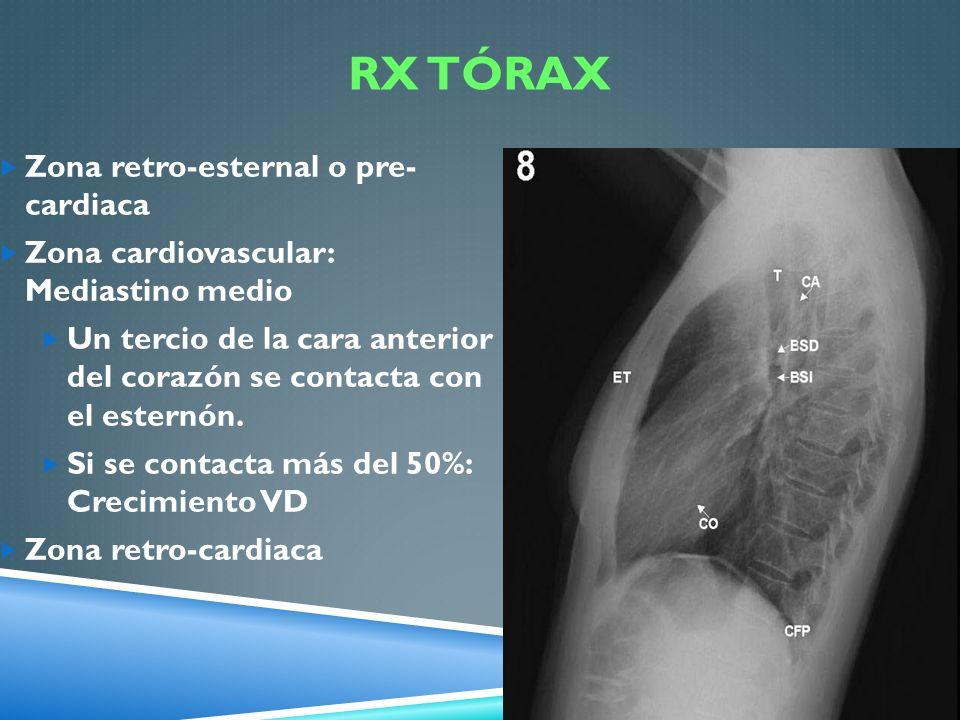 RX TÓRAX Zona retro-esternal o pre- cardiaca Zona cardiovascular: Mediastino medio Un tercio de la cara anterior del corazón se contacta con el estern