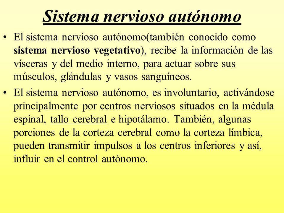 Sistema nervioso autónomo El sistema nervioso autónomo es sobre todo un sistema eferente e involuntario que transmite impulsos desde el sistema nervioso central hacia órganos periféricos.