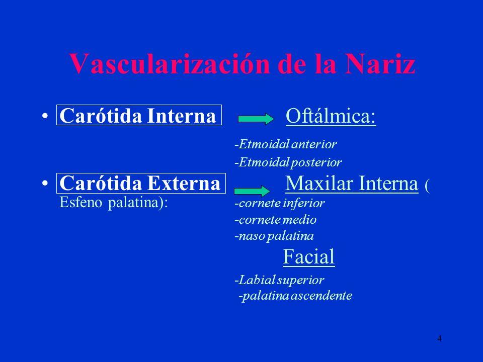 4 Vascularización de la Nariz Carótida Interna Oftálmica: -Etmoidal anterior -Etmoidal posterior Carótida Externa Maxilar Interna ( Esfeno palatina):