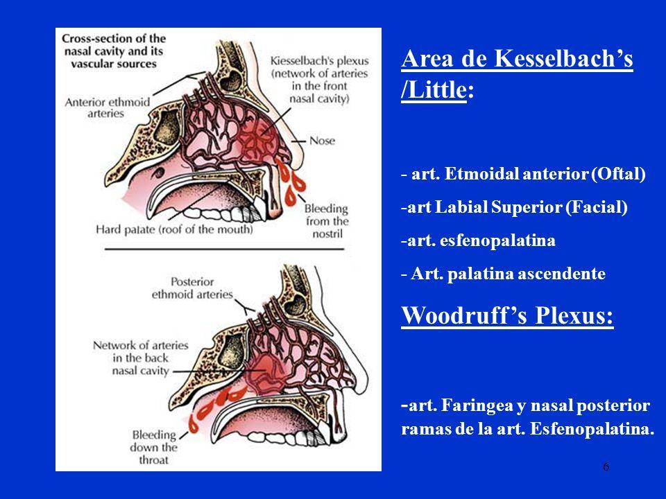 6 Area de Kesselbachs /Little: - art. Etmoidal anterior (Oftal) -art Labial Superior (Facial) -art. esfenopalatina - Art. palatina ascendente Woodruff