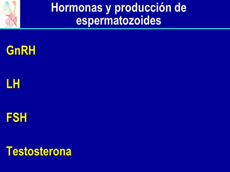 Hormonas y producción de espermatozoides GnRHLHFSHTestosterona