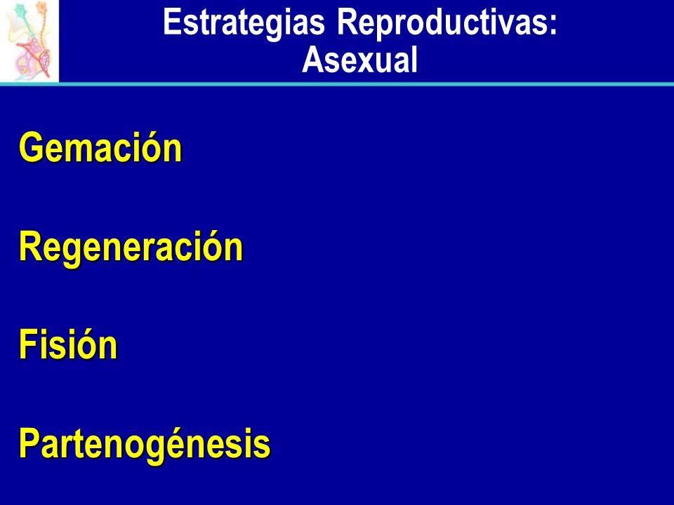 : Sexual Estrategias Reproductivas: Sexual Requiere de la meiosis y de la unión de gametos Requiere la entrega del espermatozoide a la hembra Fertilización Externa Fertilización Externa Fertilización Interna Fertilización Interna