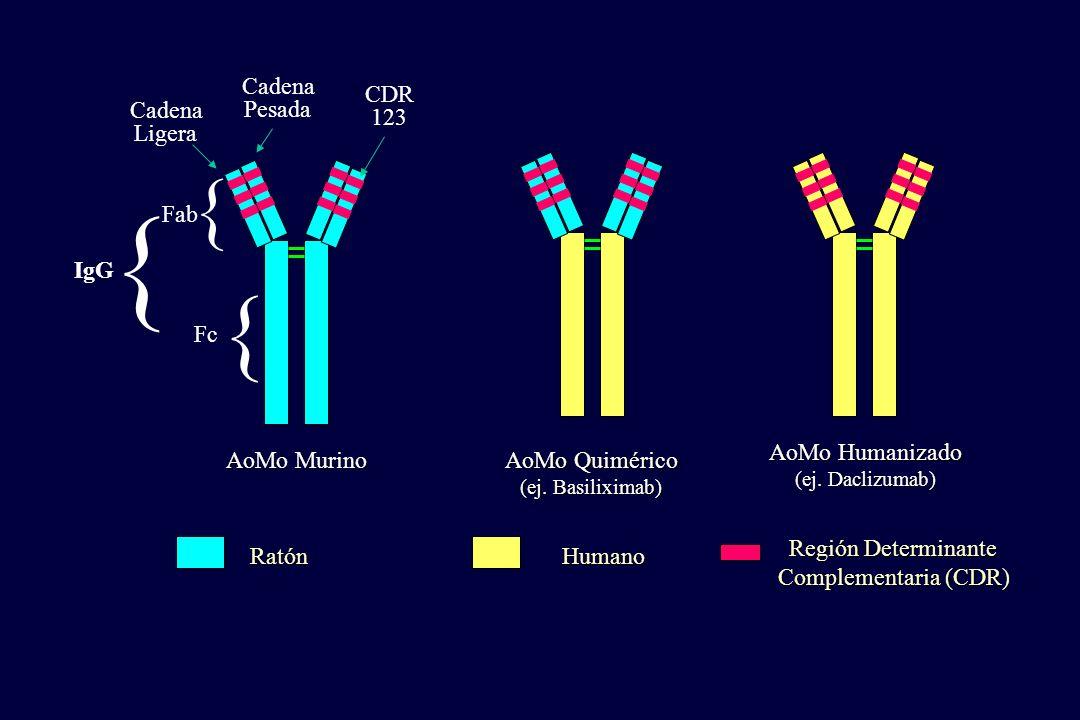 Ratón Región Determinante Complementaria (CDR) Humano AoMo Murino AoMo Quimérico (ej. Basiliximab) AoMo Humanizado (ej. Daclizumab) Cadena Pesada Cade