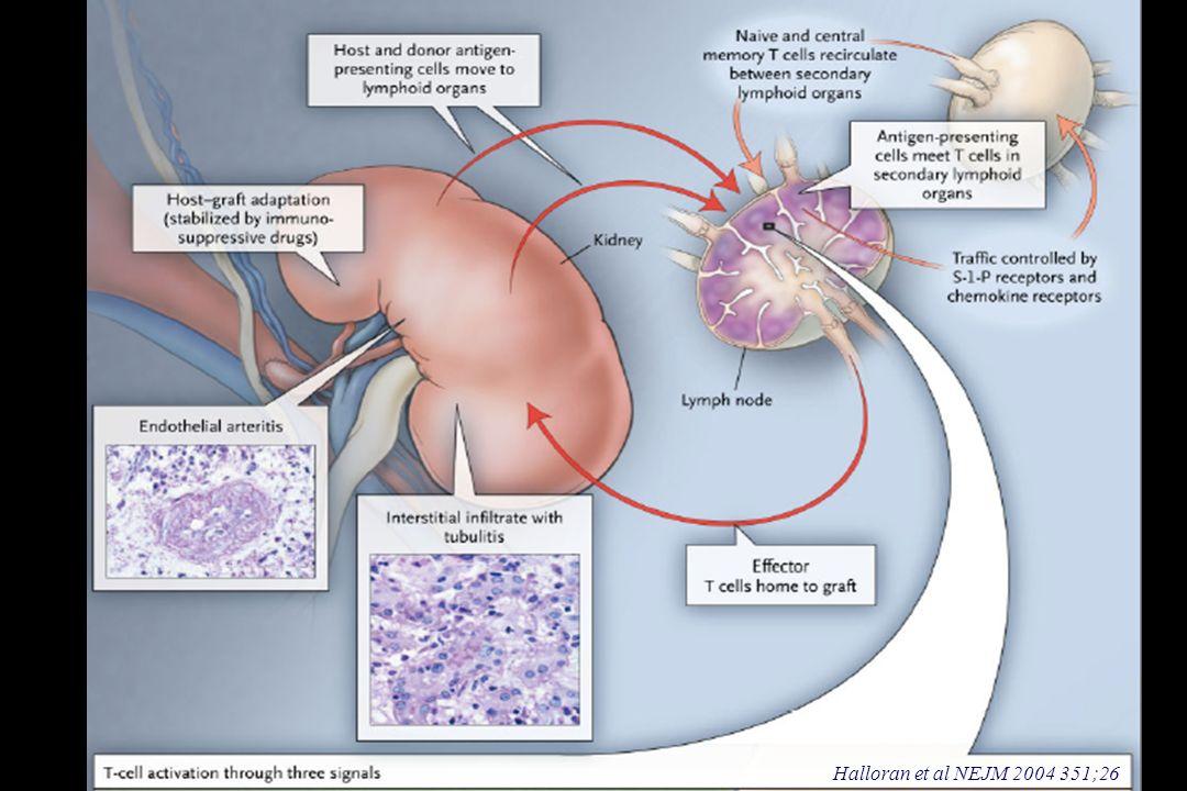 Objetivos principales de la terapia inmunosupresora en los trasplantes 1.- Prevenir o Tratar el rechazo agudo del injerto en el momento en que se produce, y mejorar la supervivencia a largo plazo del injerto y del paciente.