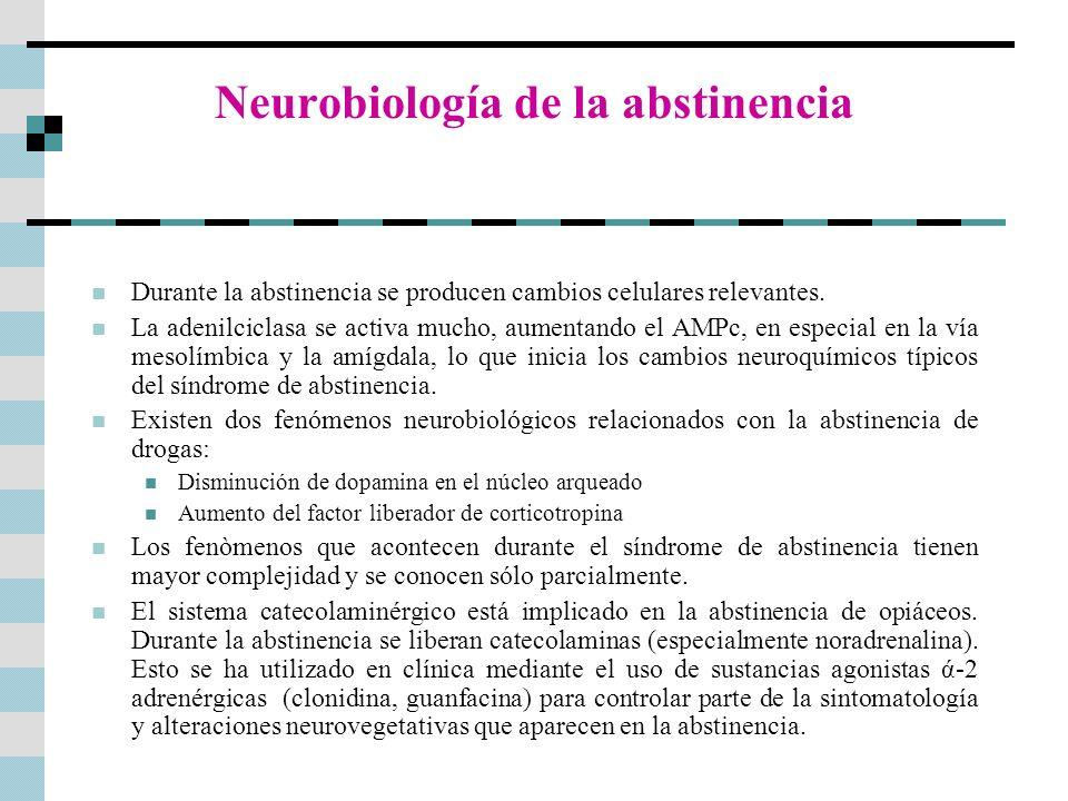 Neurobiología de la abstinencia Durante la abstinencia se producen cambios celulares relevantes. La adenilciclasa se activa mucho, aumentando el AMPc,