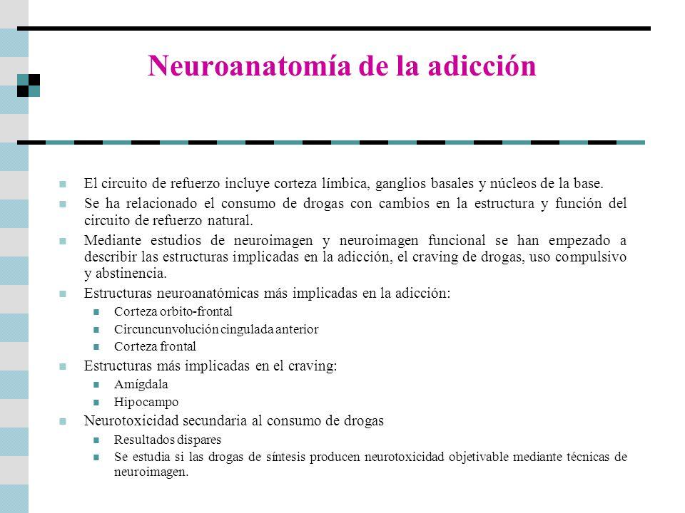Neuroanatomía de la adicción El circuito de refuerzo incluye corteza límbica, ganglios basales y núcleos de la base. Se ha relacionado el consumo de d
