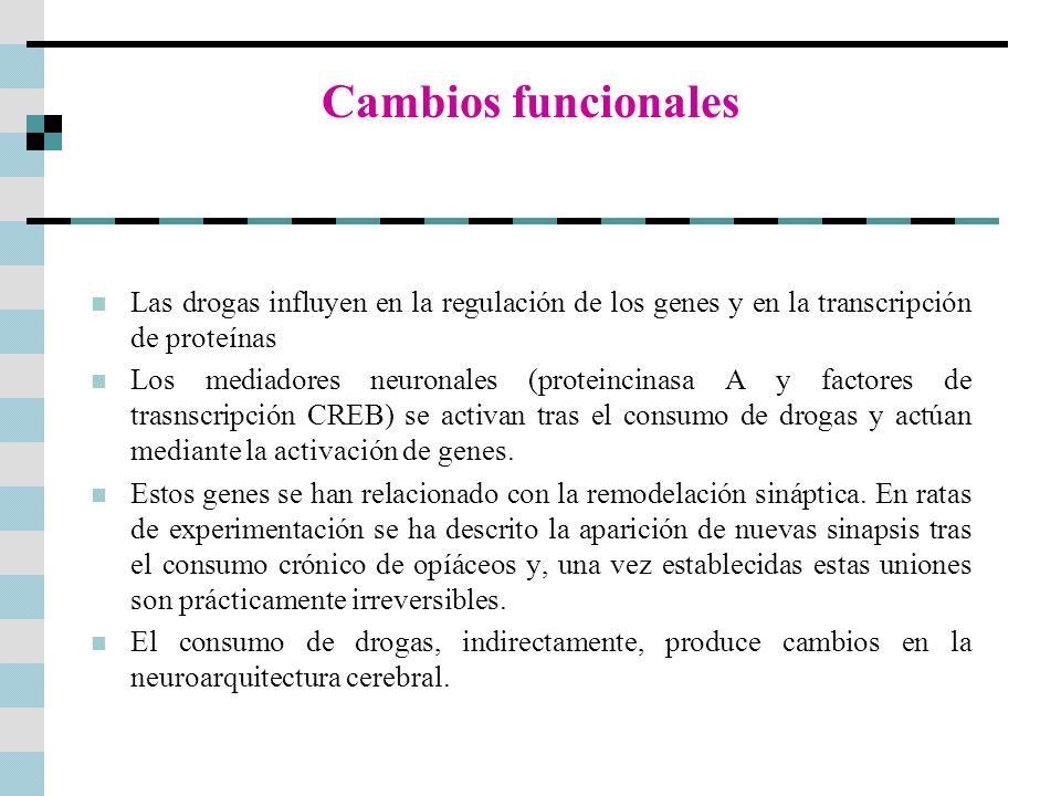 Cambios funcionales Las drogas influyen en la regulación de los genes y en la transcripción de proteínas Los mediadores neuronales (proteincinasa A y