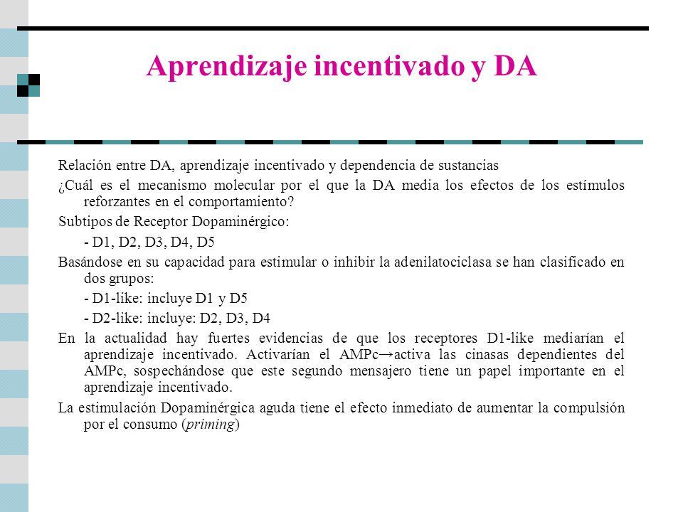 Aprendizaje incentivado y DA Relación entre DA, aprendizaje incentivado y dependencia de sustancias ¿Cuál es el mecanismo molecular por el que la DA m