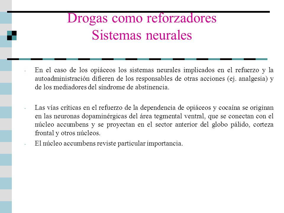 Drogas como reforzadores Sistemas neurales - En el caso de los opiáceos los sistemas neurales implicados en el refuerzo y la autoadministración difier
