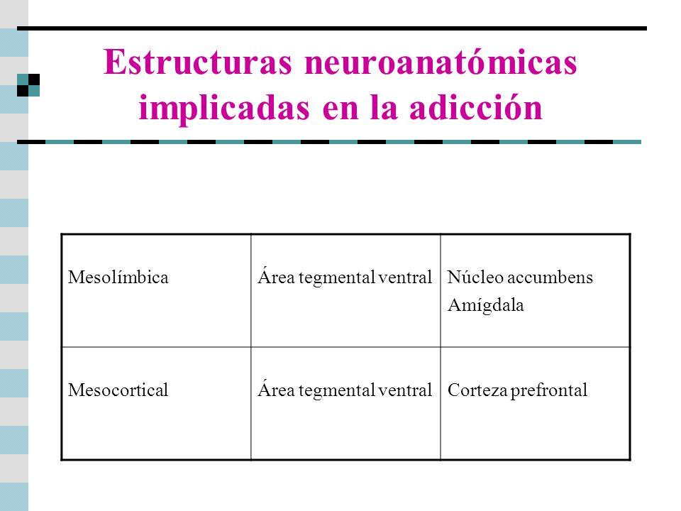 Estructuras neuroanatómicas implicadas en la adicción MesolímbicaÁrea tegmental ventralNúcleo accumbens Amígdala MesocorticalÁrea tegmental ventralCor