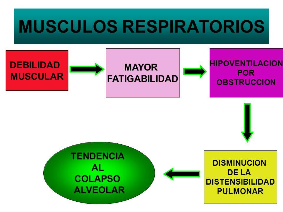 MUSCULOS RESPIRATORIOS MAYOR FATIGABILIDAD HIPOVENTILACION POR OBSTRUCCION DEBILIDAD MUSCULAR DISMINUCION DE LA DISTENSIBILIDAD PULMONAR TENDENCIA AL