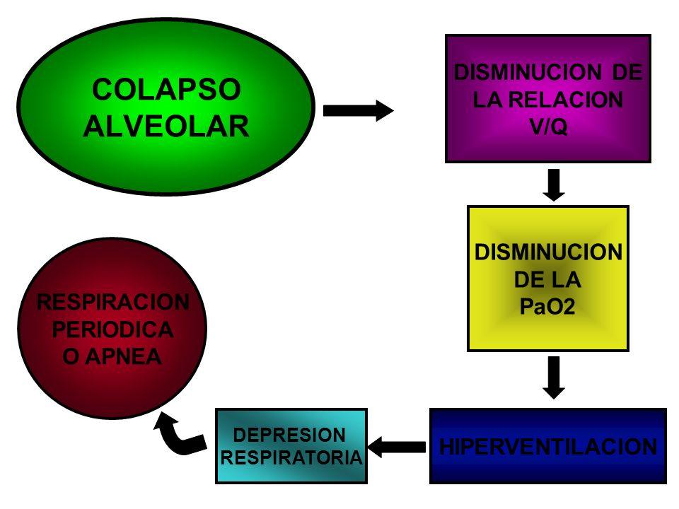 DISMINUCION DE LA RELACION V/Q DISMINUCION DE LA PaO2 HIPERVENTILACION COLAPSO ALVEOLAR DEPRESION RESPIRATORIA RESPIRACION PERIODICA O APNEA