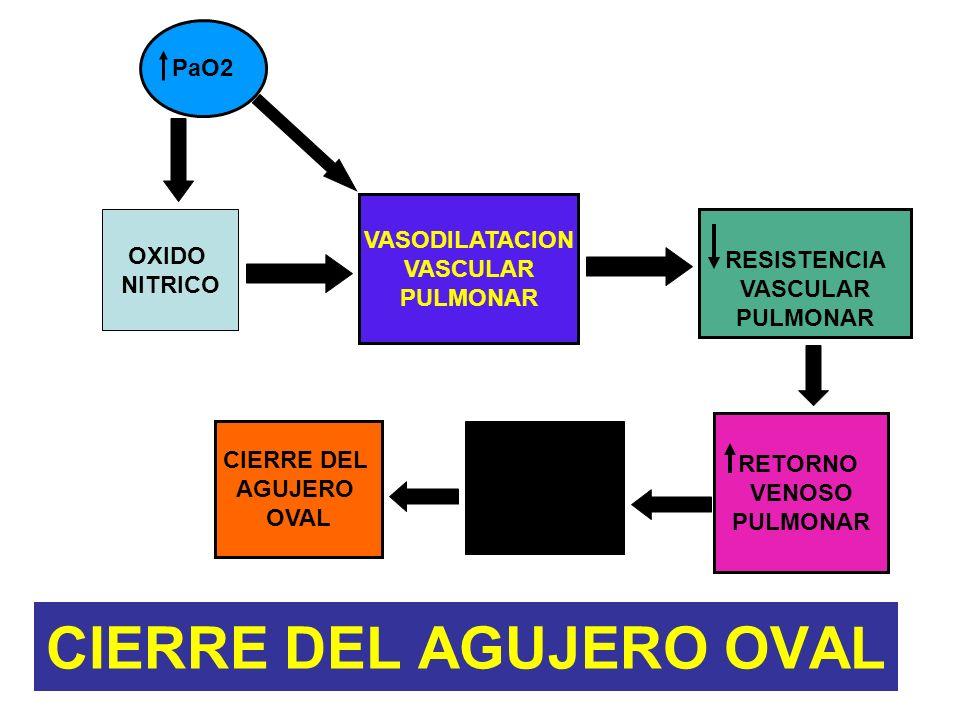 CIERRE DEL AGUJERO OVAL OXIDO NITRICO RESISTENCIA VASCULAR PULMONAR PaO2 VASODILATACION VASCULAR PULMONAR RETORNO VENOSO PULMONAR PRESION AURICULAR IZ