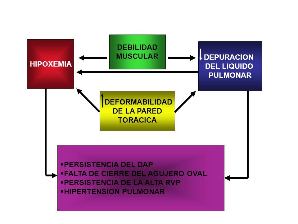 DEFORMABILIDAD DE LA PARED TORACICA DEBILIDAD MUSCULAR DEPURACION DEL LIQUIDO PULMONAR HIPOXEMIA PERSISTENCIA DEL DAP FALTA DE CIERRE DEL AGUJERO OVAL