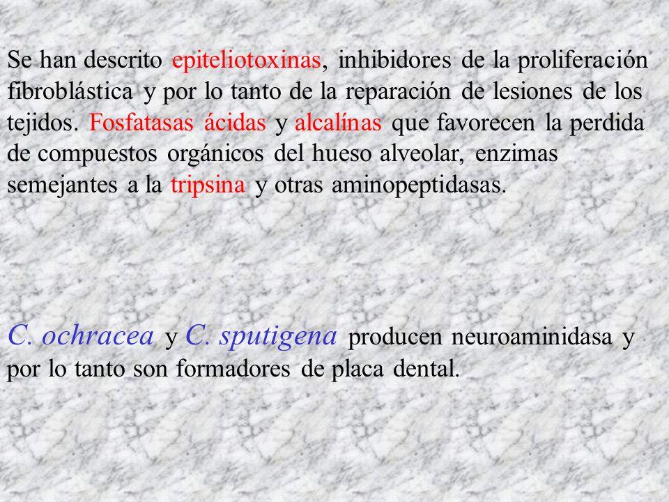 Se han descrito epiteliotoxinas, inhibidores de la proliferación fibroblástica y por lo tanto de la reparación de lesiones de los tejidos. Fosfatasas