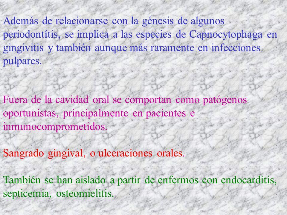 Además de relacionarse con la génesis de algunos periodontítis, se implica a las especies de Capnocytophaga en gingivitis y también aunque más raramen