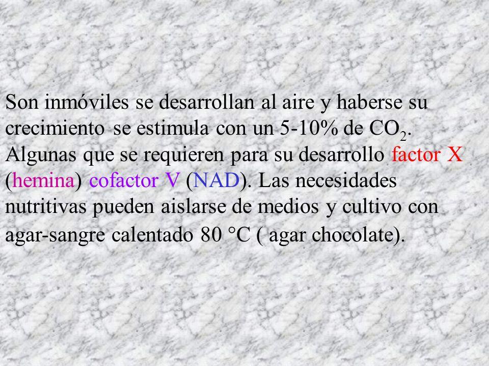 Son inmóviles se desarrollan al aire y haberse su crecimiento se estimula con un 5-10% de CO 2. Algunas que se requieren para su desarrollo factor X (
