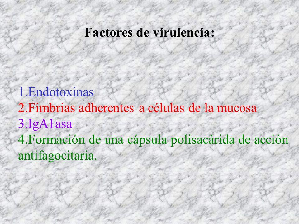 Factores de virulencia: 1.Endotoxinas 2.Fimbrias adherentes a células de la mucosa 3.IgA1asa 4.Formación de una cápsula polisacárida de acción antifag