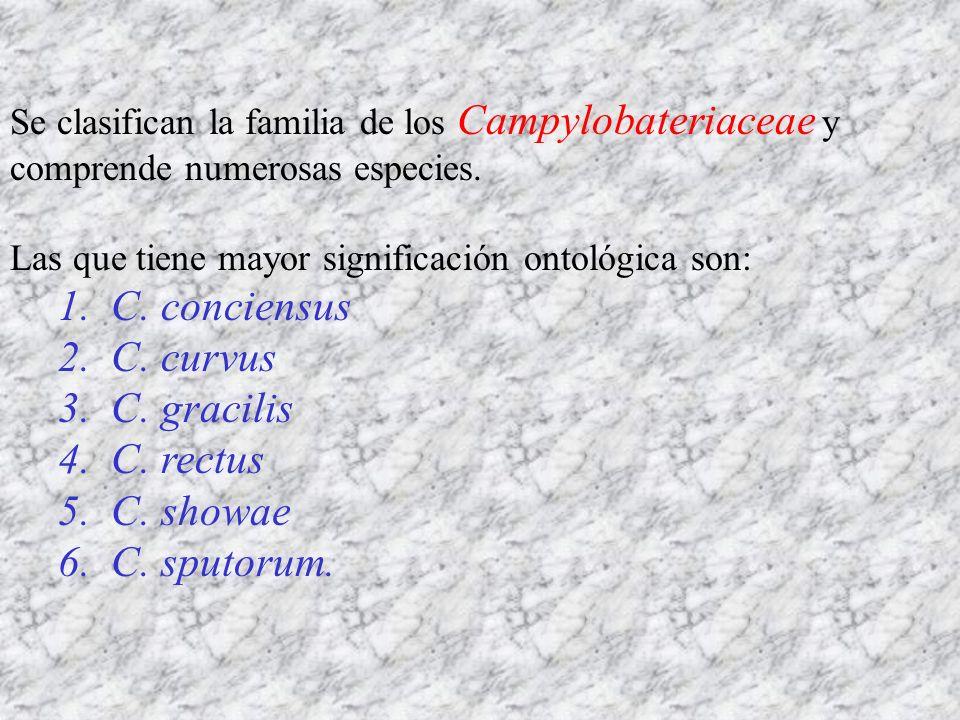 Se clasifican la familia de los Campylobateriaceae y comprende numerosas especies. Las que tiene mayor significación ontológica son: 1. C. conciensus