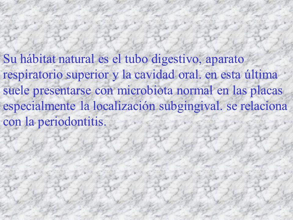 Su hábitat natural es el tubo digestivo, aparato respiratorio superior y la cavidad oral. en esta última suele presentarse con microbiota normal en la