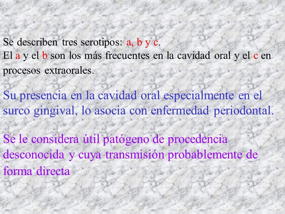 Se describen tres serotipos: a, b y c. El a y el b son los más frecuentes en la cavidad oral y el c en procesos extraorales. Su presencia en la cavida